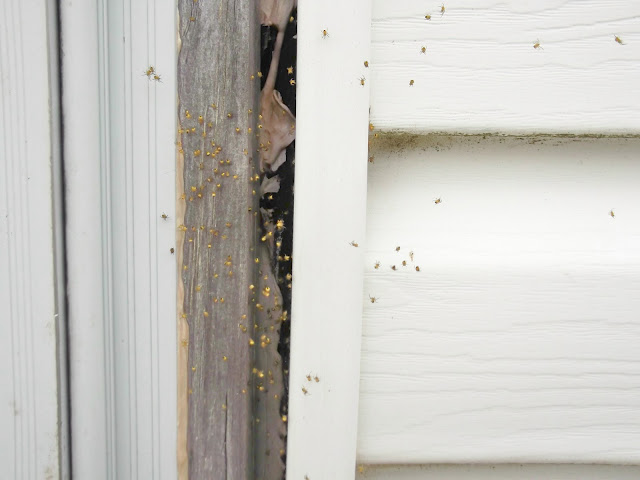 spiderlings in door jam