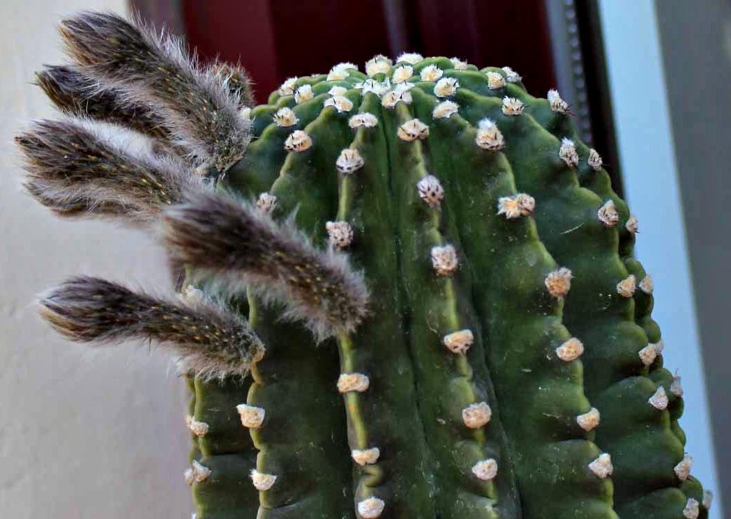 Cactus y suculentas for Cactus tipos y nombres