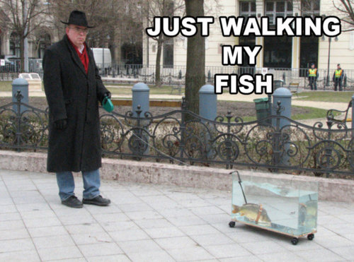 Just Walking My Fish