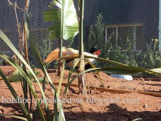 Птицы в зоологическом саду