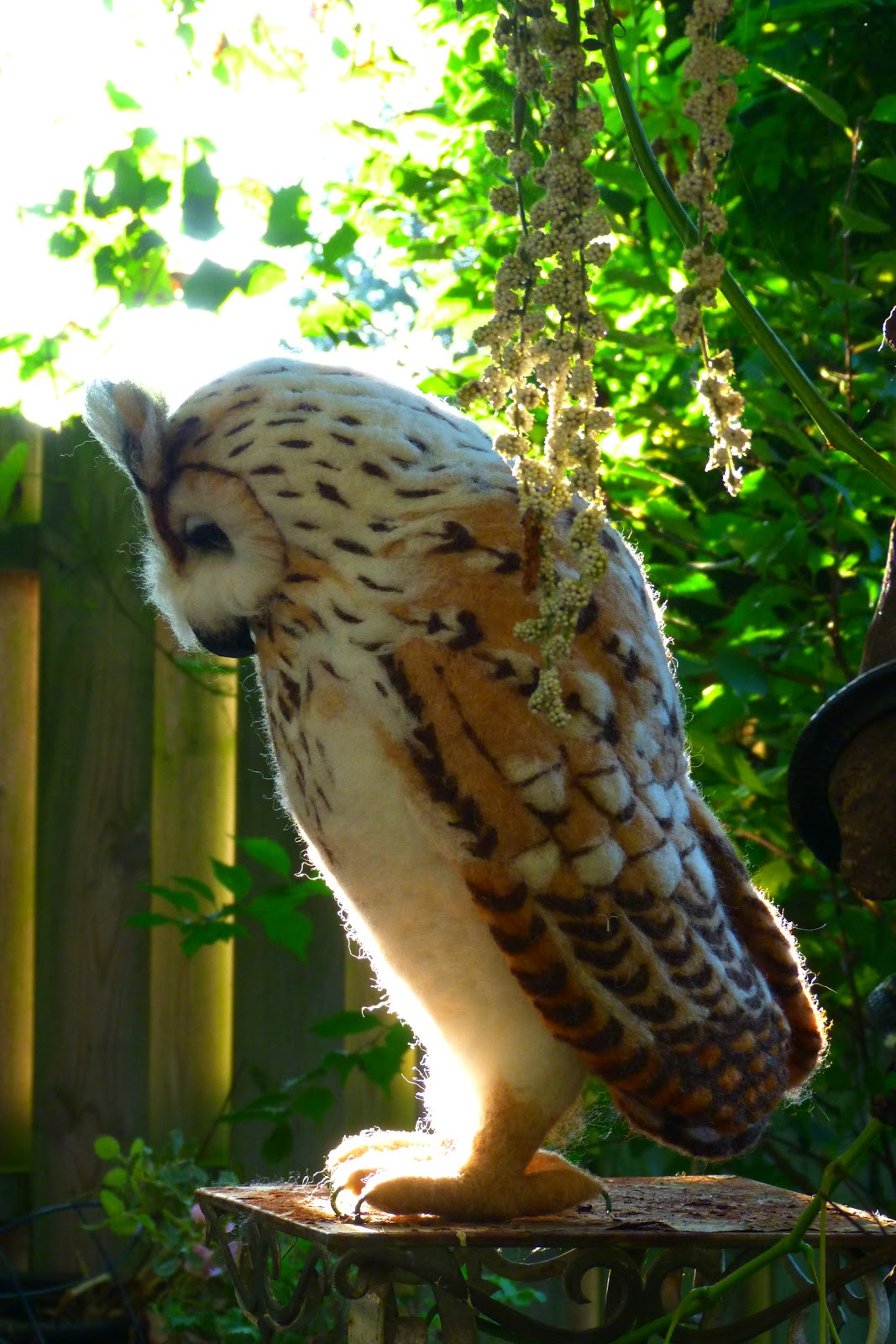 Pip\'s poppies: Pinky and the Siberian eagle owl