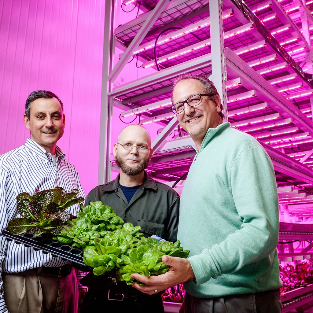 LED powered agriculture, is this the future?