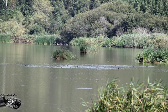 Uma fotografia de uma lagoa onde se nota  a movimentação das águas por onde eles passam.