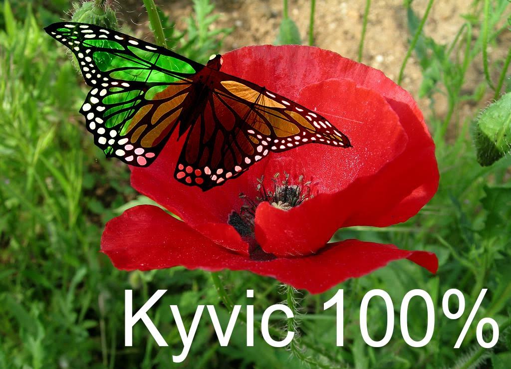 Kyvic 100%