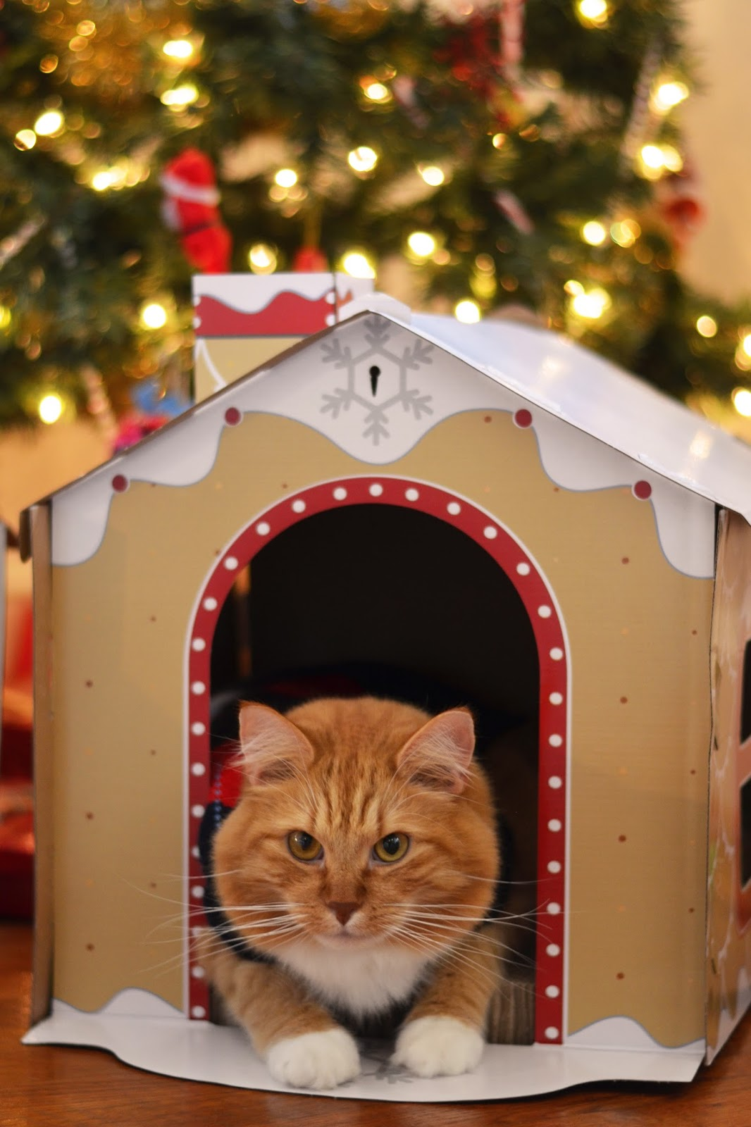 Target Gingerbread House Cat