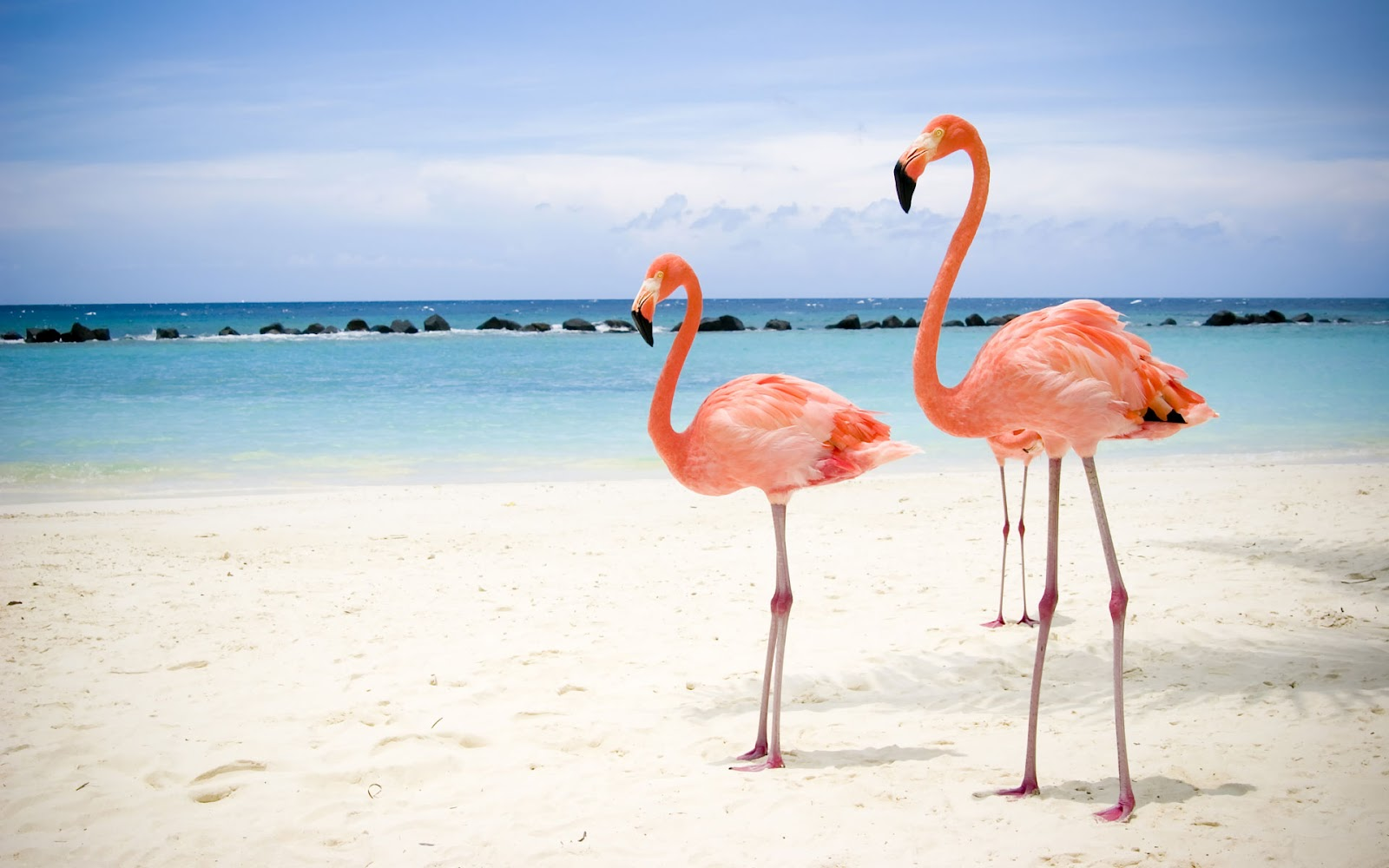 iphone drone video with Flamingo on Flamingo further Bla Bakgrunn moreover Apple Iphone 8 Plus 256gb in addition Iphone 10 Plus furthermore Google Earth Update 3d View Voyages.