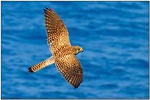 SLIDESHOW - Mediterranean Birding