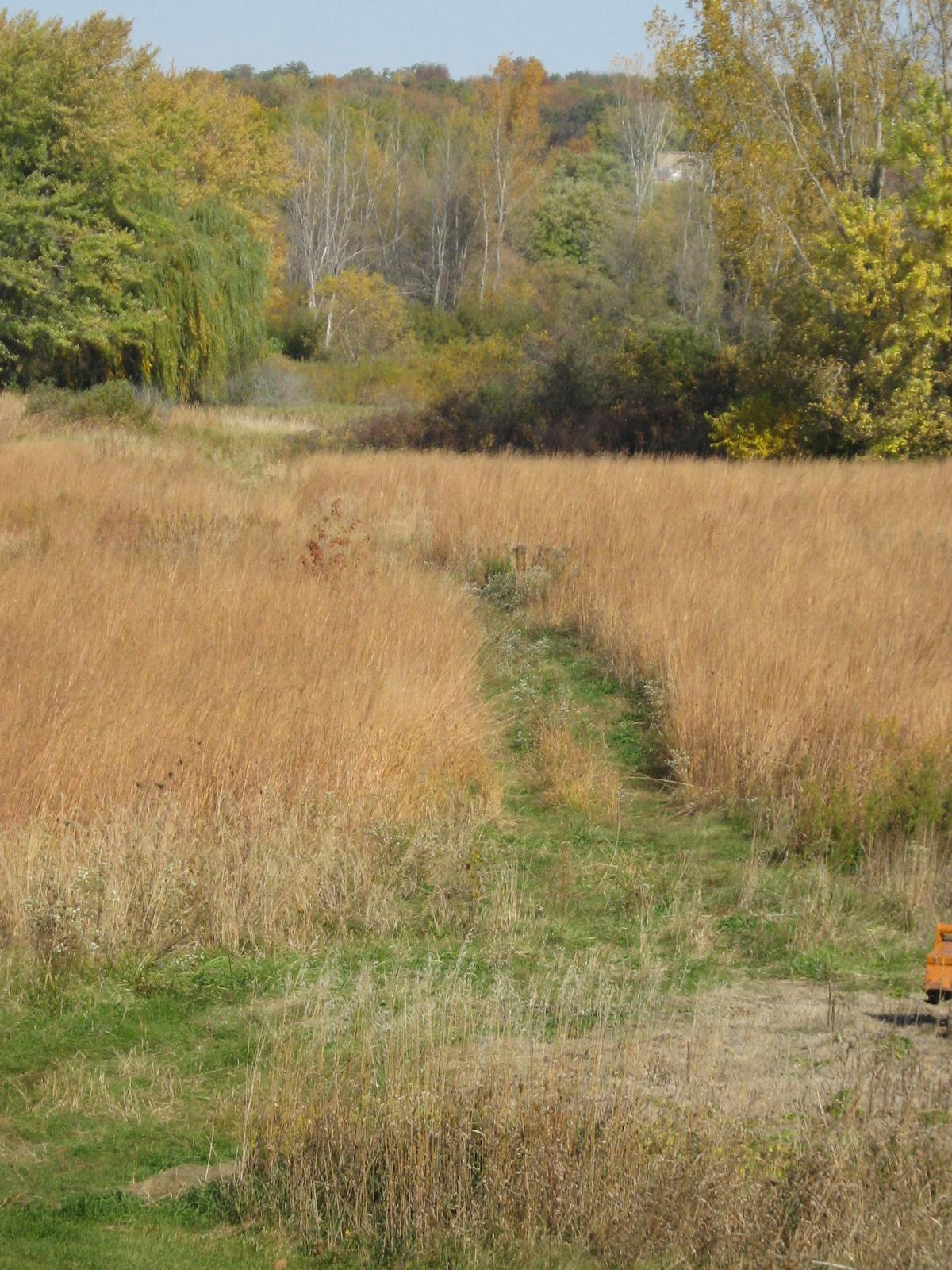 brush scheels fields of at henry