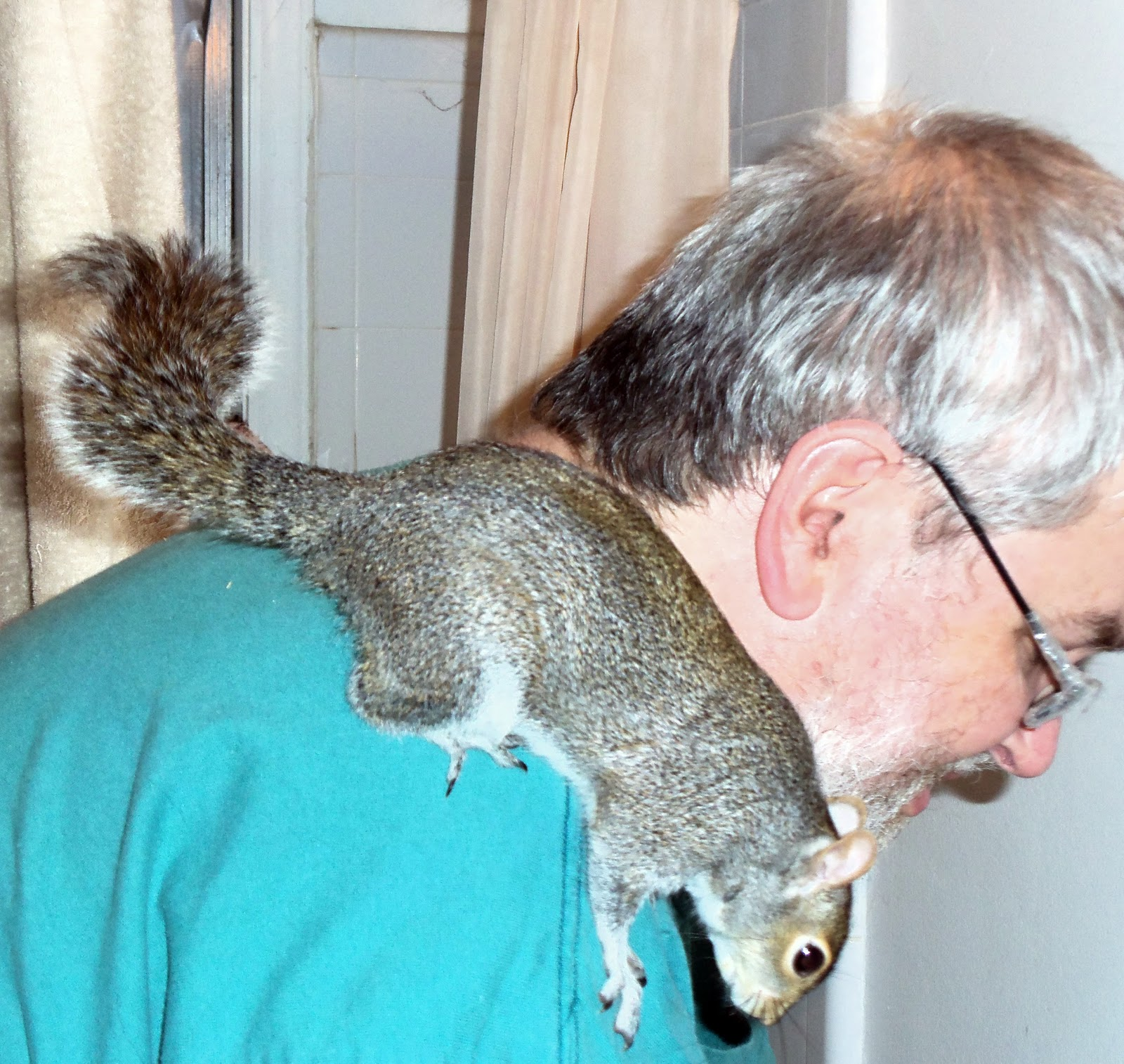 The News For Squirrels Tips On Keeping A Pet Squirrel