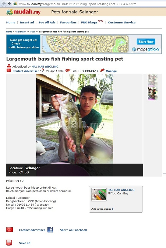 The Other Side of Me: Largemouth Bass Ada di Selangor???