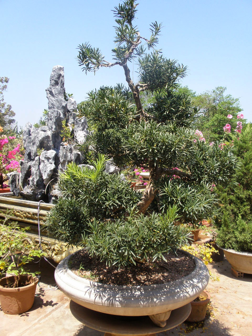Vườn Kiểng Đại Phú