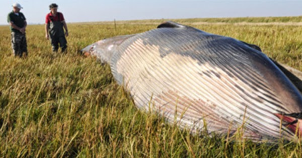 Mysterious Remains of A Whale Found in a Field in Utah