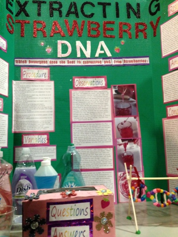 dna science fair projects