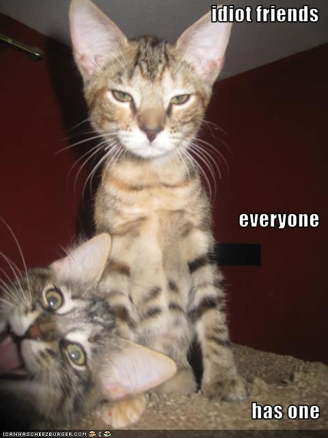 ... other funny animals! Funny Animal Pictures with Captions than sense