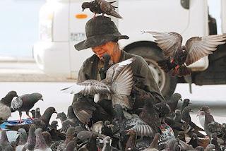 Senhora alimenta os pombos e vive cercada por eles na orla de Copacabana: cena divide opiniões Foto:  Carlos Moraes / Agência O Dia