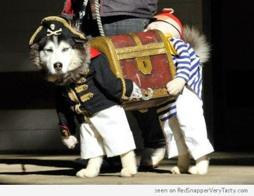 dogs carrying box outfit dog pirate halloween costume
