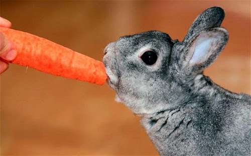 O consumo de cenoura realmente faz bem para a nossa visão