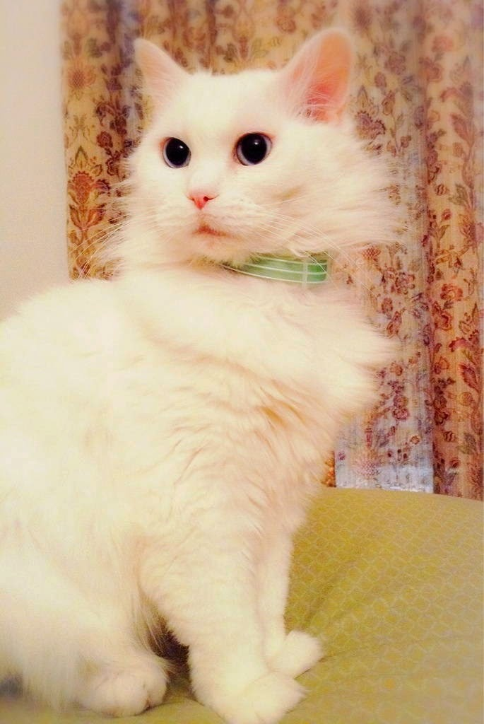 Funny cats - part 96 (40 pics + 10 gifs), cat pictures, beautiful and fluffy white cat