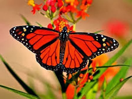 We Have Largest Collection Of Colourful Butterfly Wallpapers And Pictures Download Free Amazing Beautiful 3D Wings