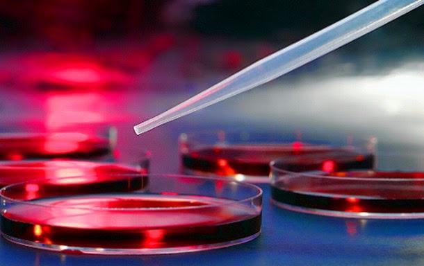 gene4 - ¿Cuál será el futuro de los niños modificados genéticamente?
