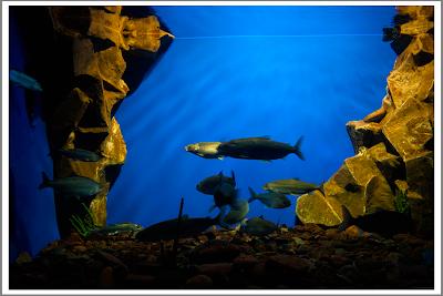 Байкальский аквариум