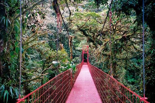 Monteverde Cloud Forest Reserve WOW banget