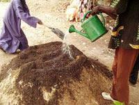 Dalam pertanian organik tentu saja tidak bisa terlepas dari BHOKASI