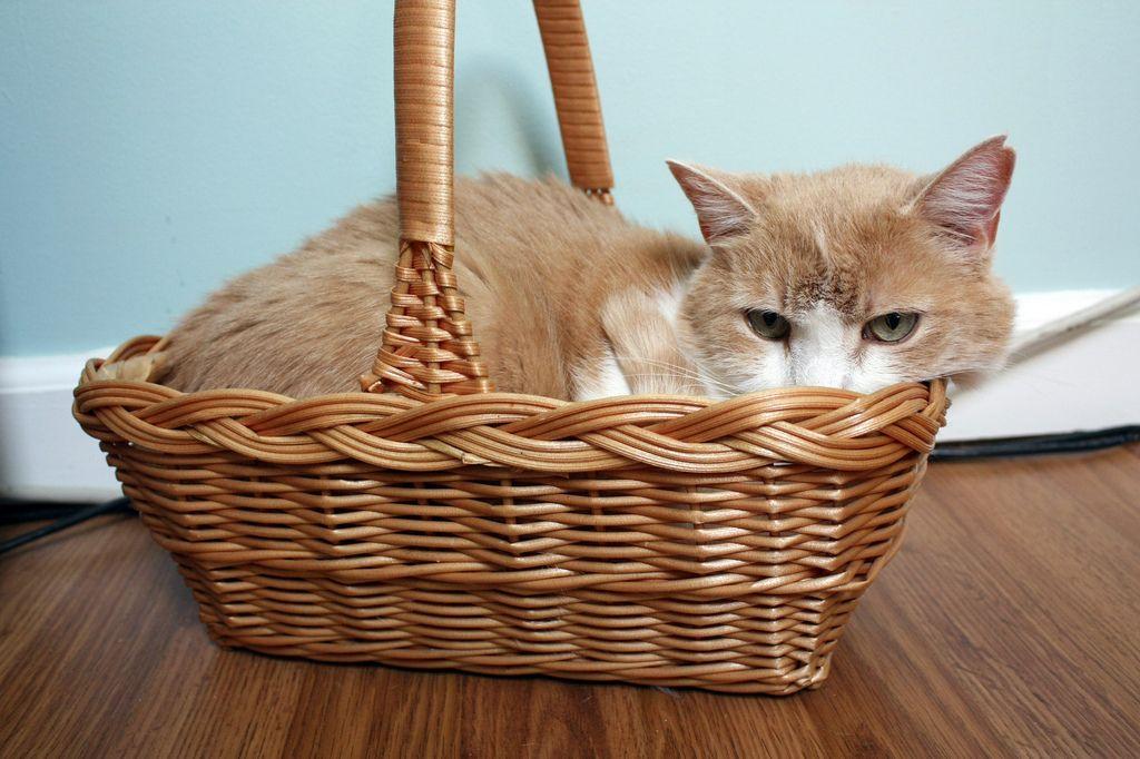 28. Basket Case by Aidras