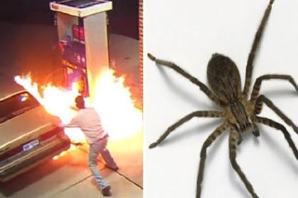 Ini Akibatnya Mengusir Laba-laba dengan Api