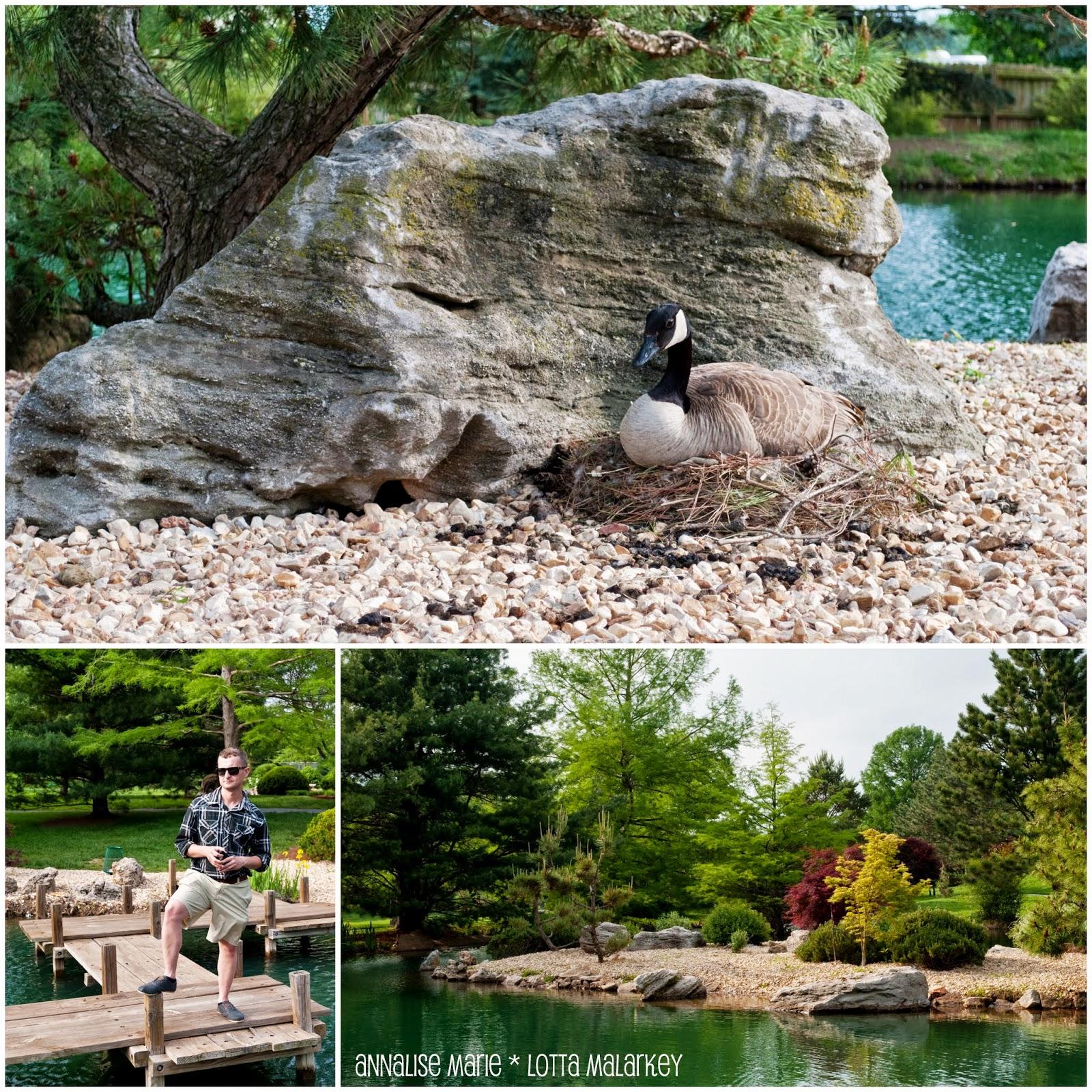 A Whole Lotta Malarkey And A Few Other Things Springfield Missouri Botanical Gardens