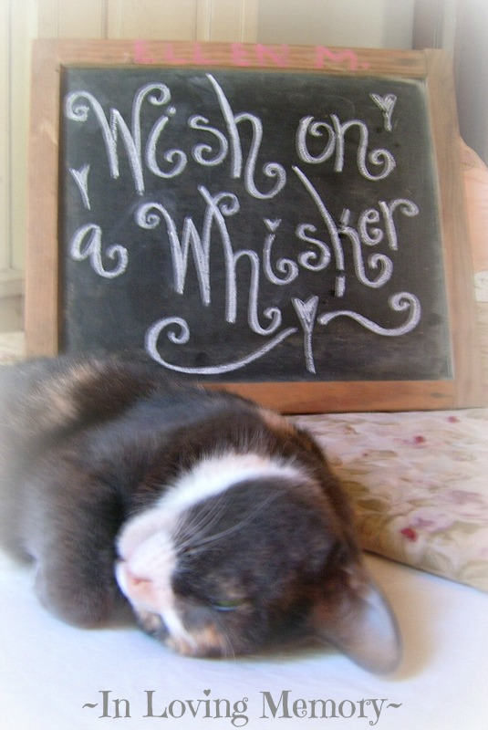 Wish on a Whisker
