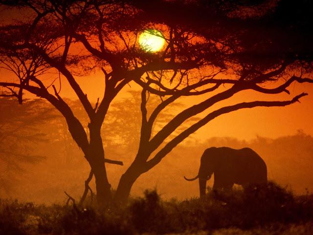 elephants,sunset, tree, wallpapers, nature, desktop, HD, HQ, tapandaola111