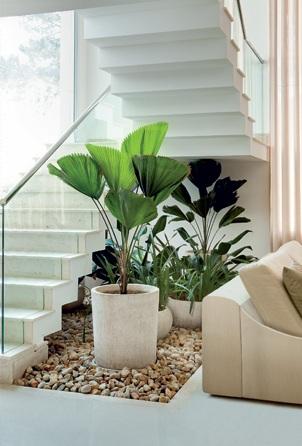 Canto do feng shui by cris ventura plantas embaixo da escada for Plantas para interiores feng shui