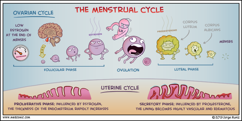 Image result for menstrual cramps comic