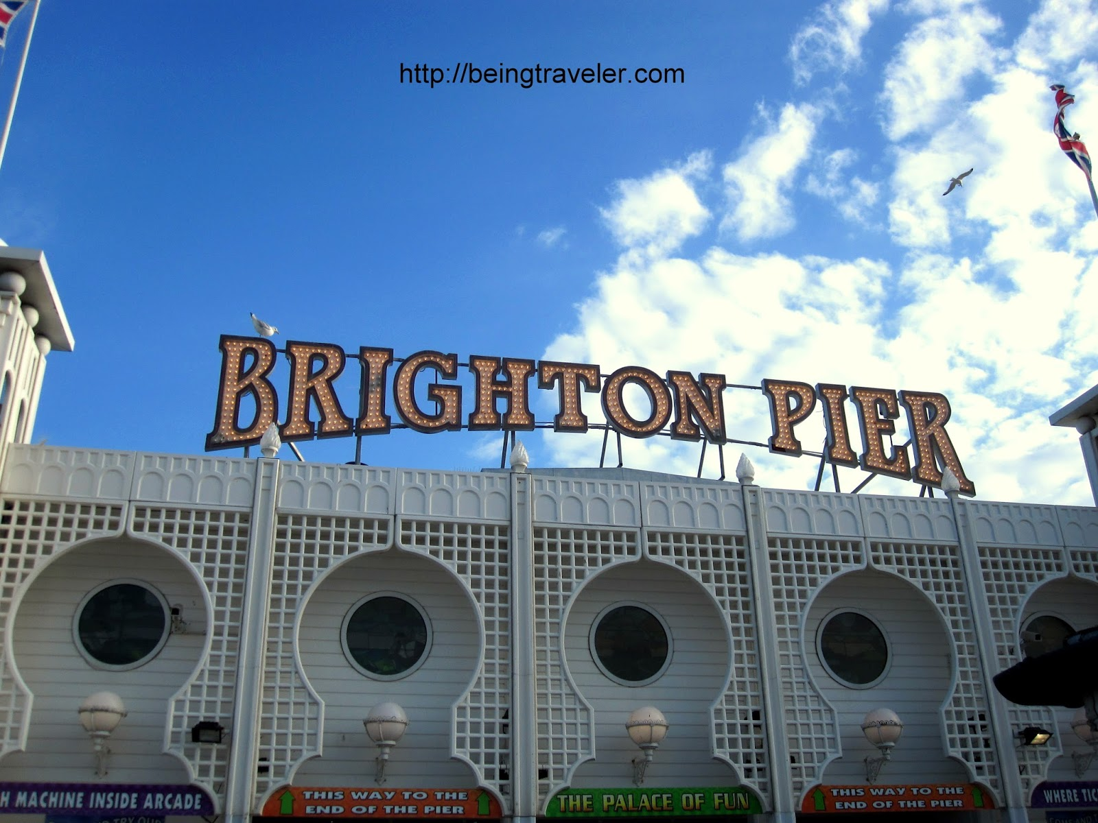 Image Result For Brighton Dog
