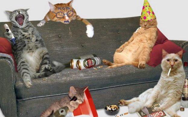imagenes graciosas de fiestas