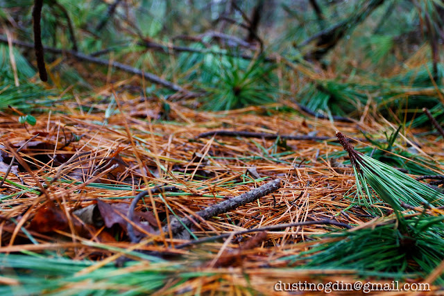 Pine needles on ground