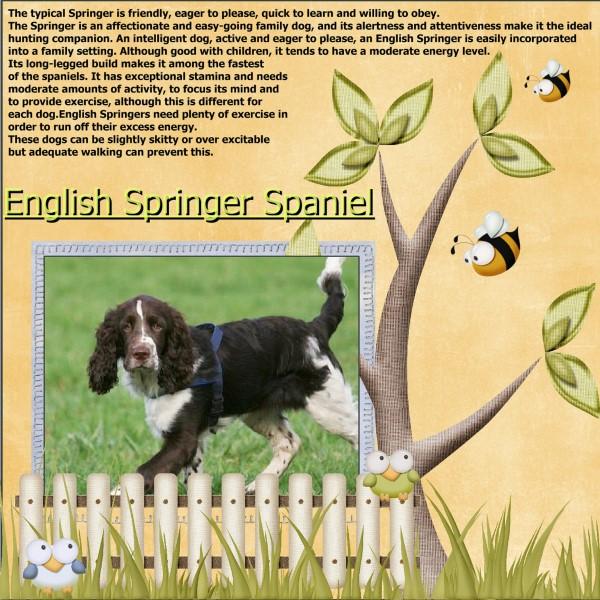 May - 2016 - English Springer Spaniel