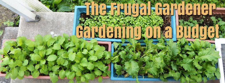 The Frugal Gardener