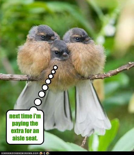 Earth 2 sd funny bird photos - Funny bird pics ...
