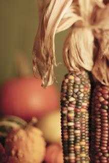 mazorca de maíz para celebrar el día de acción de gracias