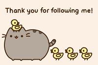 ¡Gracias por seguirme!