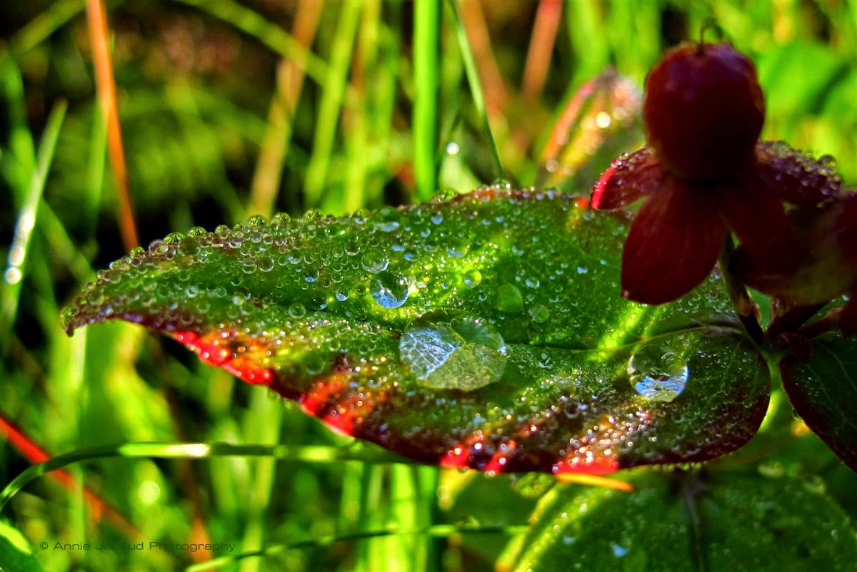 macro image of raindrops on a plant