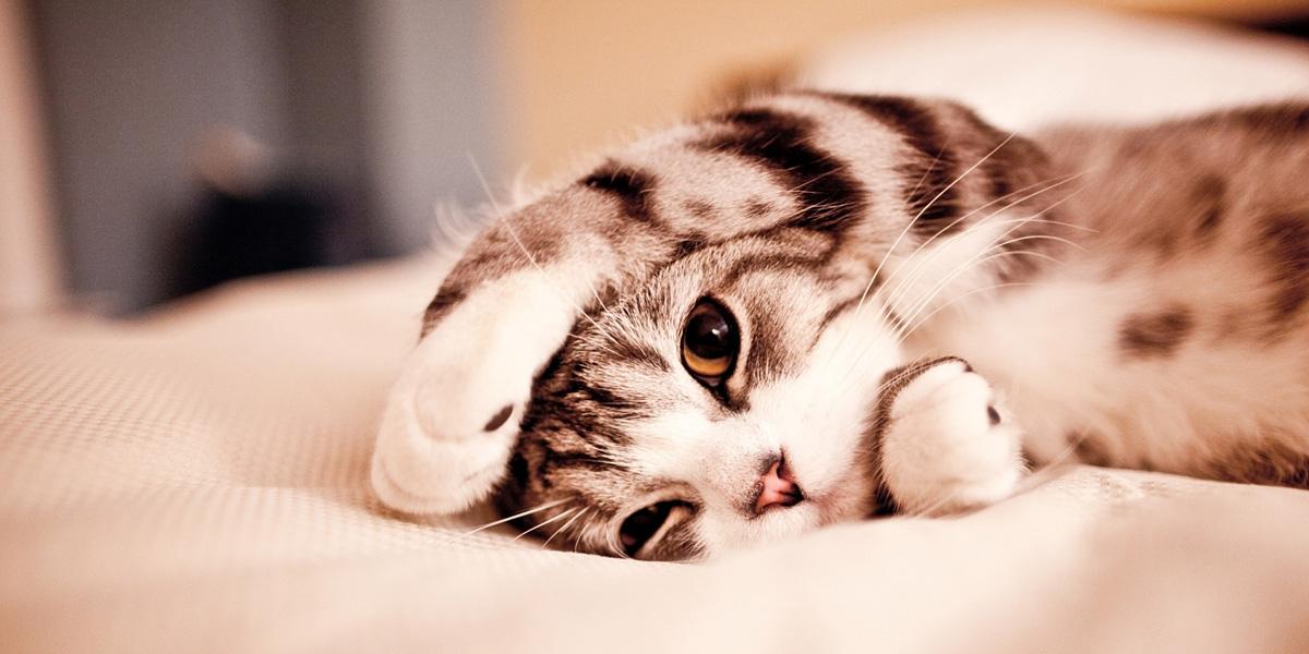 Cat in bed 300+ Muhteşem HD Twitter Kapak Fotoğrafları