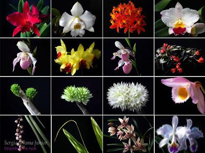 Fotos do blog Orquídeas no Apê