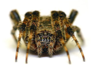 Barn Spider Wallpapers