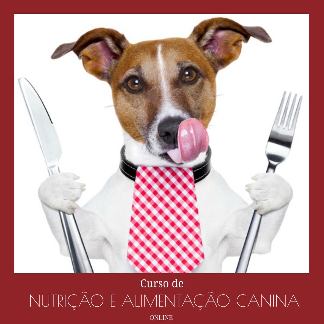 Curso de Nutrição e Alimentação Canina (online)