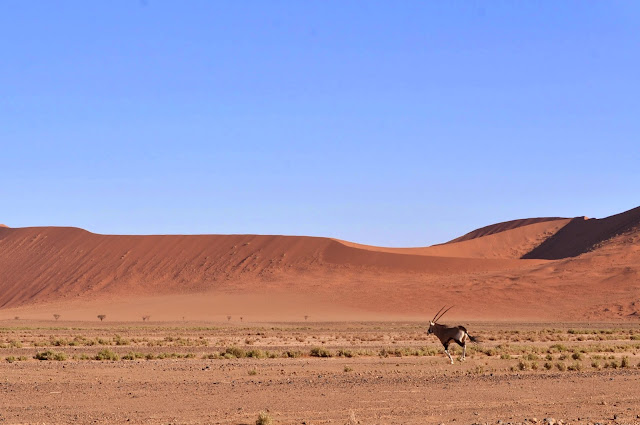 Gemsbok running in Sossusvlei