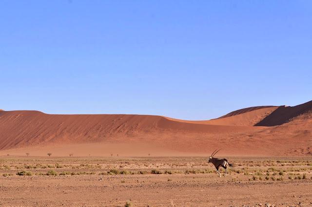Gemsbok running in Sossusvlei
