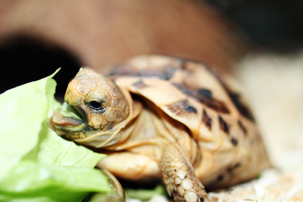 Ginger Peachy: In My Backyard - Issue #11 - Turtles, Tortoises or ...
